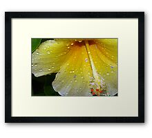 Drenched by a tropical storm Framed Print