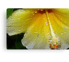Drenched by a tropical storm Canvas Print