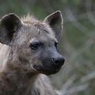 Spotted Hyena Portrait by naturalnomad