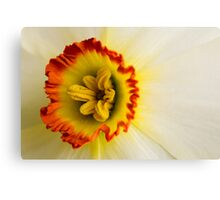 Daffodil crown Canvas Print