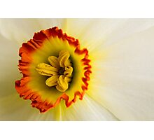 Daffodil crown Photographic Print