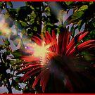"""""""Sunday Flower Of My Day"""" by Burnie"""