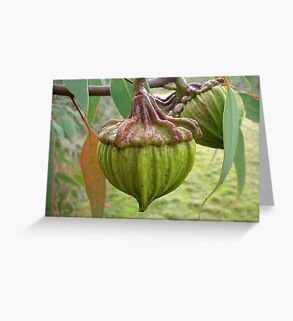 Australian Gumnut Greeting Card