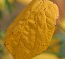 Yellow Leaf by v-something