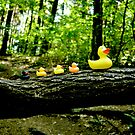 Ducks hiking in the forest by Katarina Kuhar