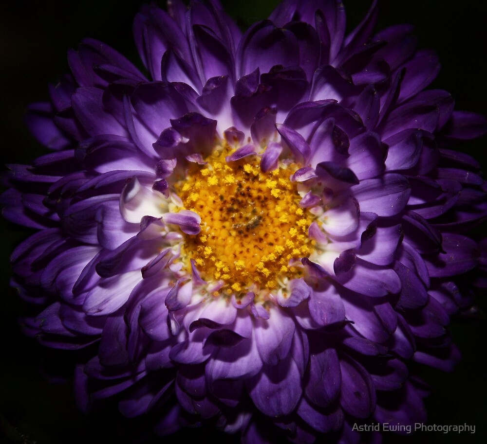 The Power of Purple by Astrid Ewing Photography