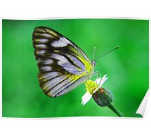 butterfly butterfly Poster