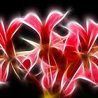 Pink flowers explosion by Francesco Malpensi