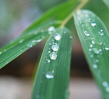 Bamboo Drops. by newcastlepablo