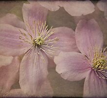 Blossom by Julesrules