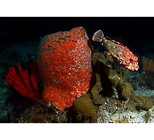 Rock Cod Photographic Print