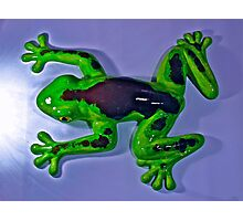 Francis the frog Photographic Print