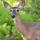 Backyard Deer by Patrick Downey