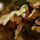 A Spring Beauty by vigor