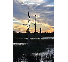 Nighttime in the Wetlands Photographic Print