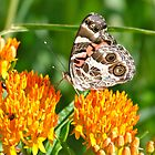 """Butterfly with """"The Look"""" by Gordon Taylor"""