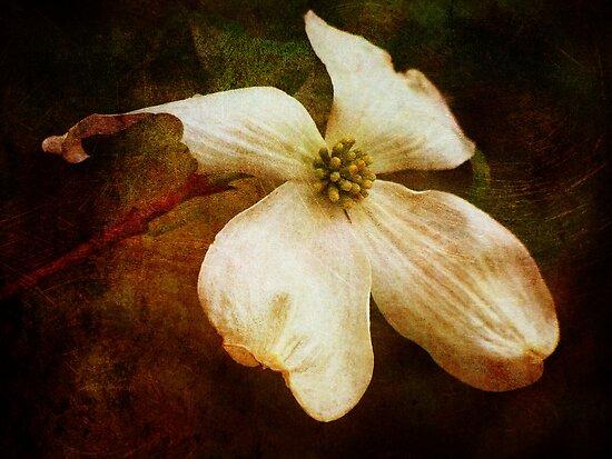 Dogwood (for Dreamflower) by vigor
