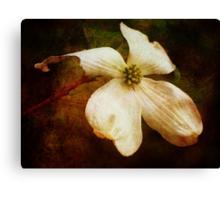 Dogwood (for Dreamflower) Canvas Print