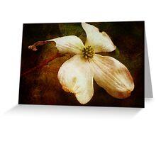 Dogwood (for Dreamflower) Greeting Card