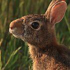 Good Morning Rabbit by J. L. Gould