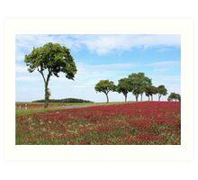 Red Clover Field Art Print