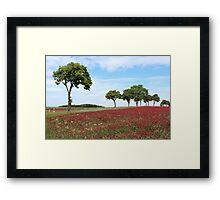Red Clover Field Framed Print
