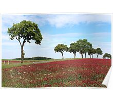 Red Clover Field Poster