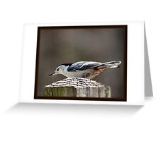"""The Nuthatch"" Greeting Card"