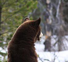 American Black Bear Standing by Alyce Taylor