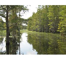 Cypress Trail by the Jane Green Swamp Photographic Print