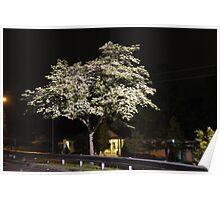 Night Tree 2 Poster