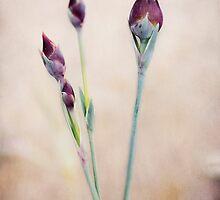 Delightful Carnations by nefetiti