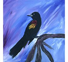 Red Winged Black Bird Photographic Print