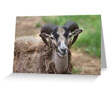 billygoat in the farm Greeting Card