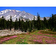 Panther Meadows, Mount Shasta Photographic Print