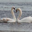 Heart shaped Swans by steve917