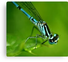 Common Blue Damselfly Canvas Print