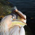 Two pelicans by Jasna