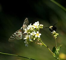 Bumble Bee and Butterfly by Amy Hallowes