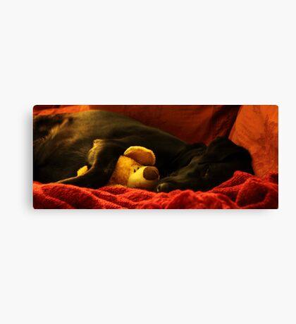 Labrador - Sleepy head Canvas Print