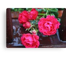 A GROUP OF ROSE'S  Canvas Print