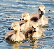 "*Goslings At The Marina"" by Barbara Summering"
