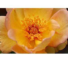 Flower Fairy Photographic Print