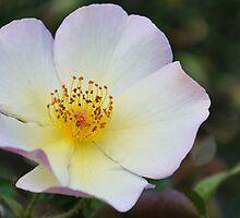 Flower by TonyaAnjean