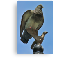 Hey! Would'da Mean I'm Not An Eagle! Do I Look Like A Pigeon To You? Canvas Print