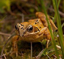 Common Frog by Jon Lees