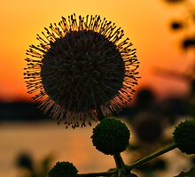 Nature's Sunset by Charles Dobbs Photography
