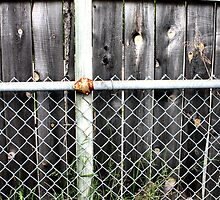 A Prolific Fence by Candice Wishman