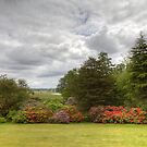 Landscape with rhododendrons by Debu55y