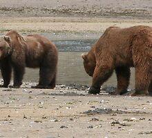Bears of Kodiak Island by sueyo